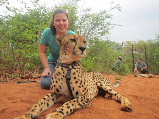 Mukuni Big 5 Safaris: Cheetah