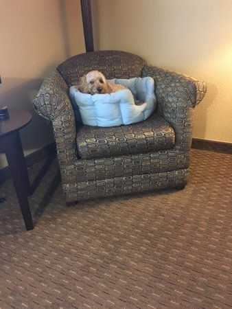 Natchitoches, LA: My two little dogs welcomed and the fee was reasonable. I always brings my own beds and blankets
