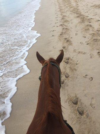 Phuket International Horse Club: photo0.jpg