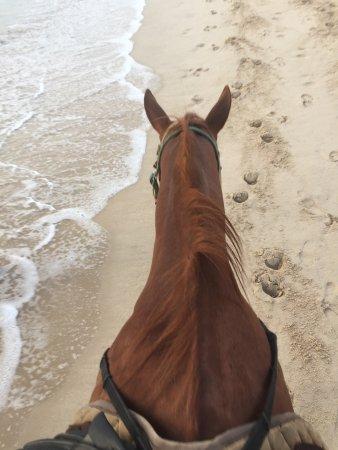 Phuket International Horse Club: photo1.jpg