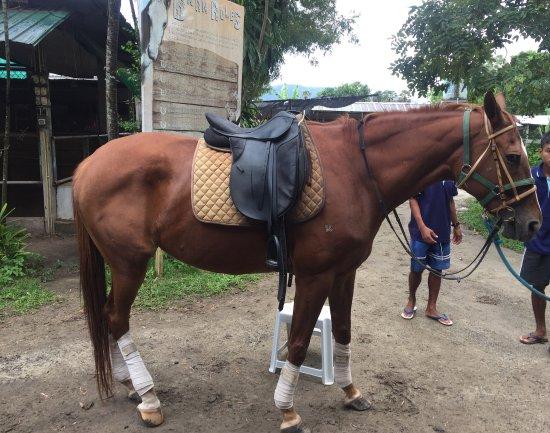 Phuket International Horse Club: photo3.jpg