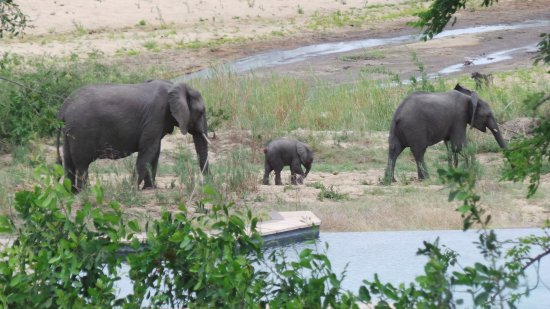 Mala Mala Private Game Reserve, Sudáfrica: This was taken from our patio.