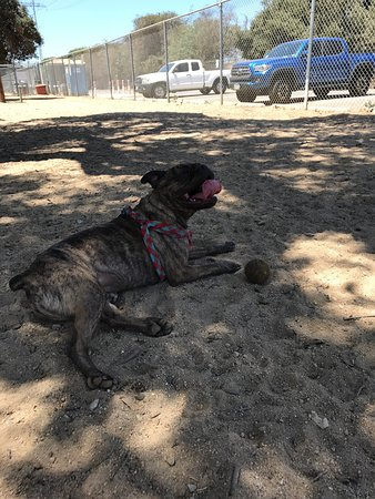 Griffith Park Dog Park Glendale Ca