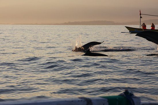 Seririt, Indonesia: Dolphin watch with the sunrise. Not to be missed.