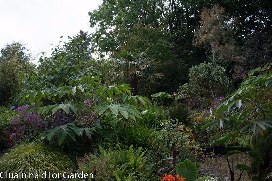 Cluain Na Dtor Seaside Nursery Gardens Exotic Planting Garden