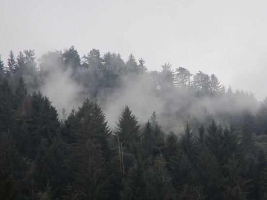 Klamath, CA: View from the top of the gondola on a misty day