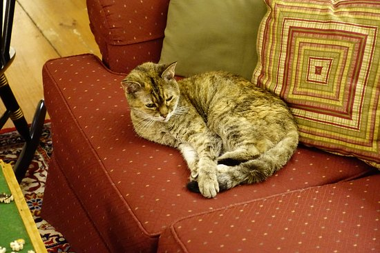 Saint Johnsbury, VT: Reese, the inn cat...relaxing with the guests.