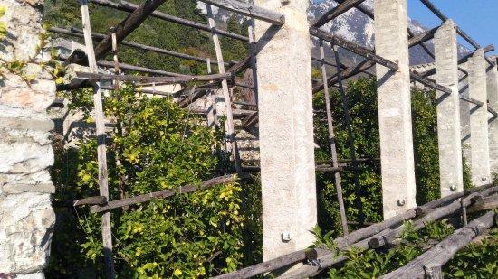 Gargnano, Italië: vista della limonaia