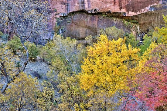 Weeping Rock Trail : Fall Foliage at Weeping Rock