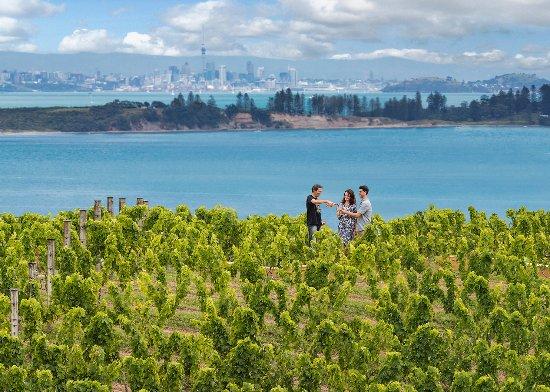 Auckland, New Zealand: Wine tasting on Waiheke Island