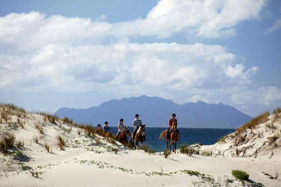 Auckland, New Zealand: Horse riding on the white-sand beach, Pakiri beach, only an hour from the city centre.