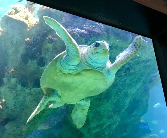 New England Aquarium (Boston) - All You Need to Know ...