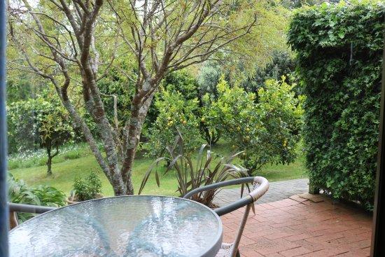 Warkworth, New Zealand: Lemon trees from the patio