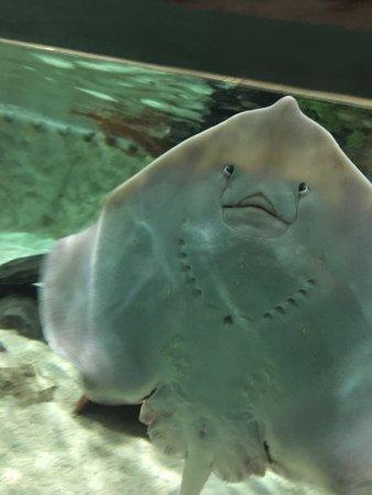 Lakes Aquarium: photo0.jpg