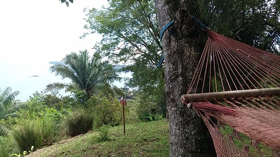 Isla Boca Brava, Panamá: Wildlife