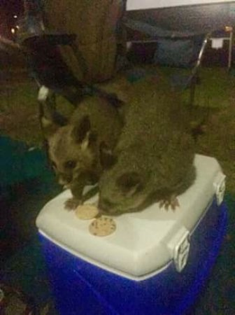 Wangi Wangi, Australia: Friendly visitors sharing a cheese platter