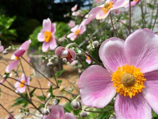 Norfolk Botanical Garden: photo0.jpg