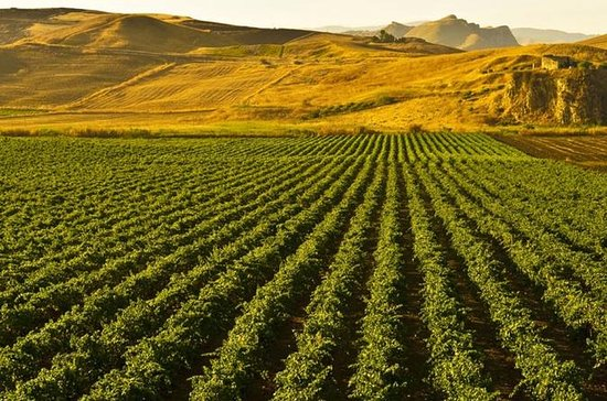 Halvdag Privat Sicilian Vinsmagning...