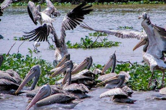 Sanctuaire d'oiseaux de Prek Toal...