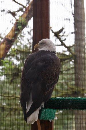 Cascades Raptor Center: photo7.jpg