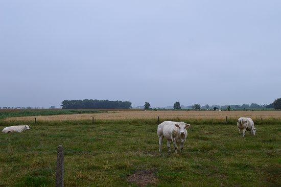 Alveringem, Бельгия: met et plattelands uitzicht ben je net op vakantie