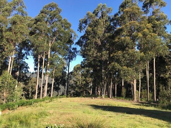 Wilmot, Australia: photo3.jpg