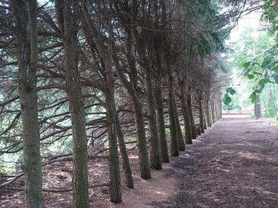 Arboretum LOSS