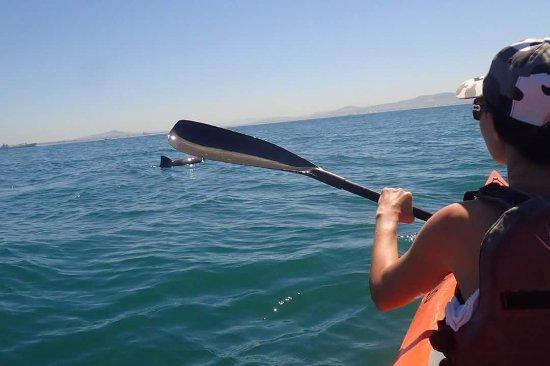 Kaskazi Kayaks & Adventures: FB_IMG_1511778166623_large.jpg