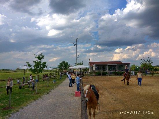 Καρδίτσα, Ελλάδα: Βόλτες με άλογα και πόνυ για μικρούς και μεγάλους.
