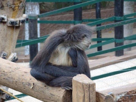 Zoological Park of Centenario ( Parque Zoologico del Centenario) : Atèle