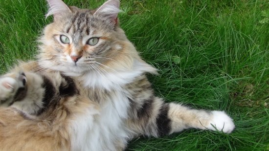 Chat respiration rapide
