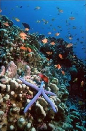 Aqua Vision Scuba Diving: IMG-20171127-WA0013_large.jpg