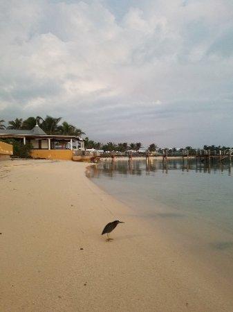 Augusta Bay Bahamas: 20171124_060554_large.jpg