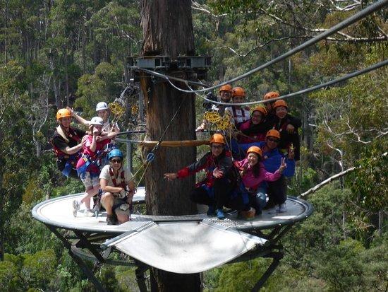 Hollybank Treetops Adventure: bf94a021-24f3-4a58-9daa-f4ae06eea86e_603b6cd1-8c4e-4d07-bb39-184f78e85150_o_large.jpg