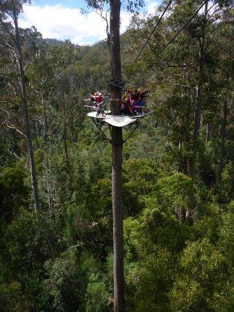 Hollybank Treetops Adventure: cd0a8926-dd99-4d3f-8aa4-4b8a95e932d1_f021b388-09f9-4ed3-8db9-45224fa9487a_o_large.jpg