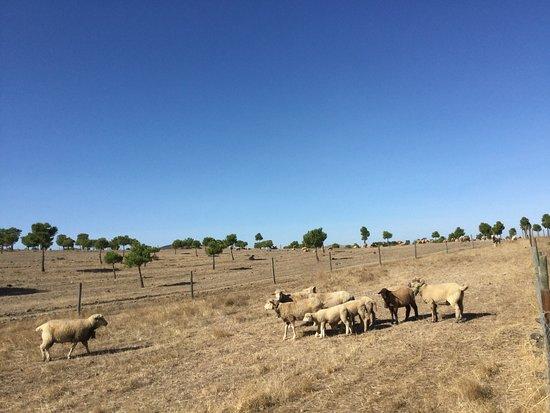 Castro Verde, Portugal : paysage alentour