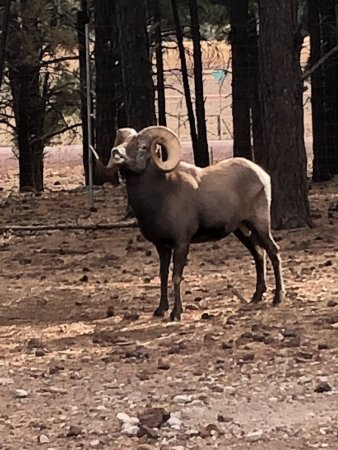Williams, AZ: Great animal viewing.They come right up to the car!