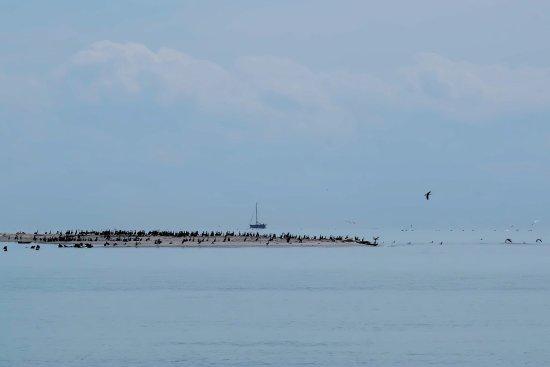 Nysted, الدنمارك: Robbenbänke von Rödsand