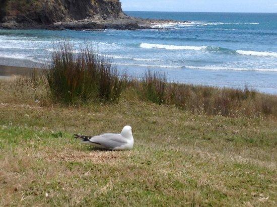 Kaitaia, Selandia Baru: Lunch beach!
