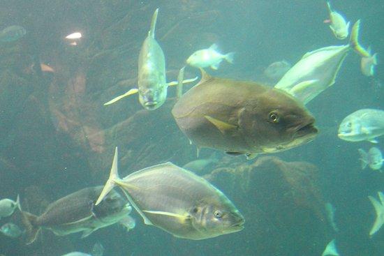 Aquario da Madeira: Großes Becken
