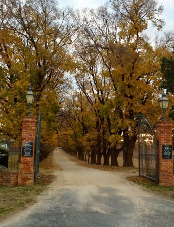 Wahgunyah, Australia: All Saints Winery driveway.