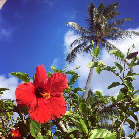 Napili Kai Beach Resort: photo1.jpg