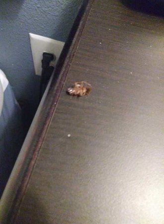 Suburban Extended Stay Pensacola-NAS: Nightstand next to bed- after I killed it!