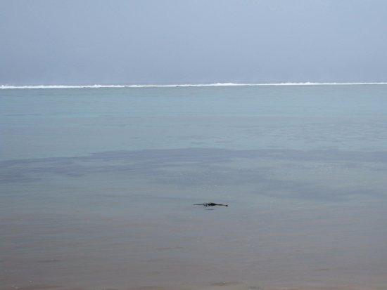 Coral Coast, Fiji: Beach view