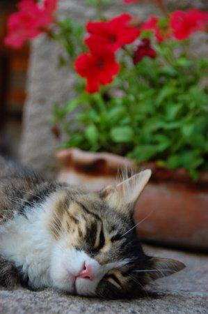 Assos Alarga, Bed and Breakfast: Our cat