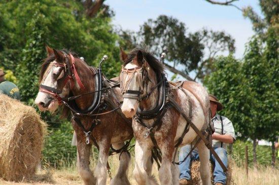 Mont De Lancey Historic Homestead: Working Horse Festival weekend Nov 2017