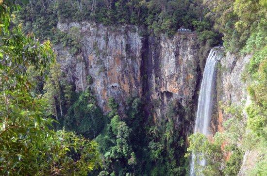Springbrook National Park Rainforest