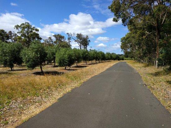 Metricup, Australia: IMG_20171128_093319_large.jpg