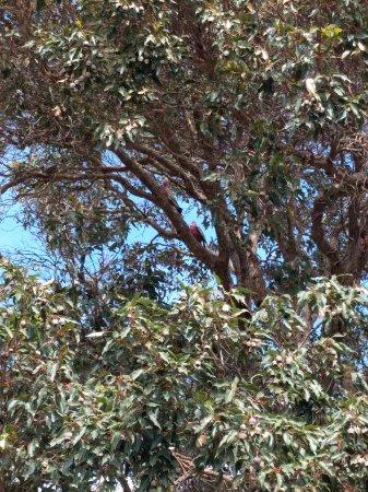 Metricup, Australia: IMG_20171128_093851_large.jpg