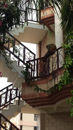 N.Homestay: External staircase (with monkey!)